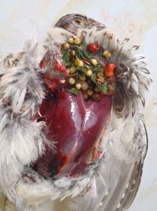 The breast and ruptured crop of a grouse