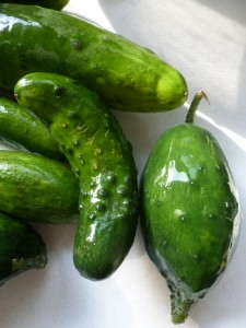 Little cucumbers from Tipi Creek