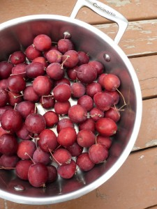 A pot of Dolgo crabapples, ready to be made into jelly