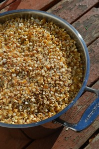 Dried kernels of corn, ready to be ground into cornmeal