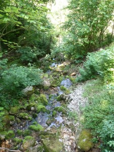 A stream in the hills of Lower Austria