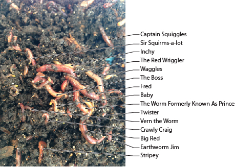 worm names