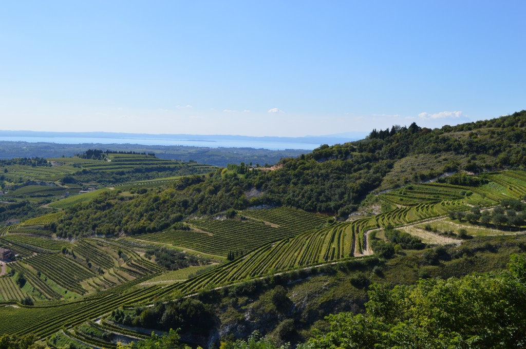 A view of Valpolicella vineyards and Lake Garda