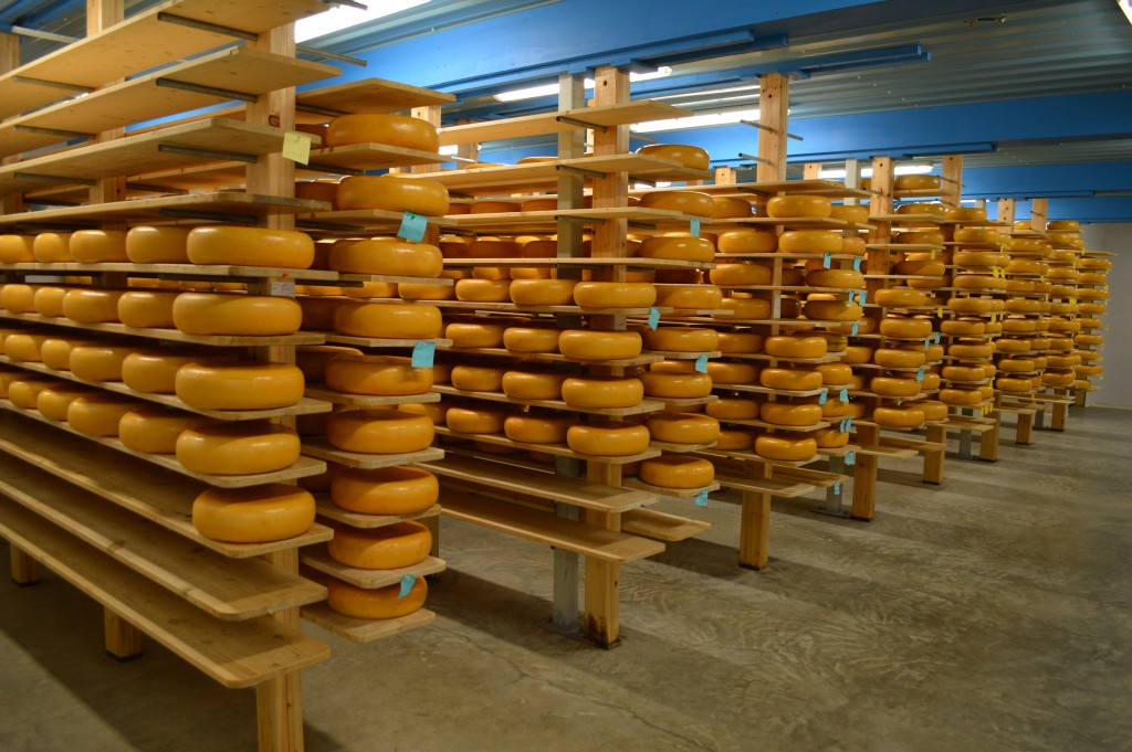 Shelves of gouda aging at Sylvan Star Cheese
