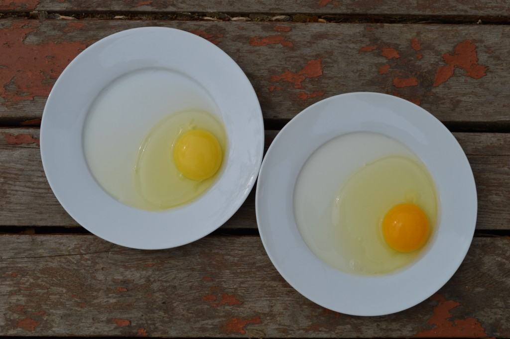 Two eggs of different origins and ages: on the left is a fresh egg from a local producer, on the right a two week old egg from a grocery store.