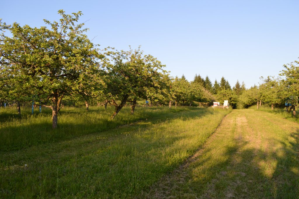 A view of the apple orchard and a small beekeeping set-up.