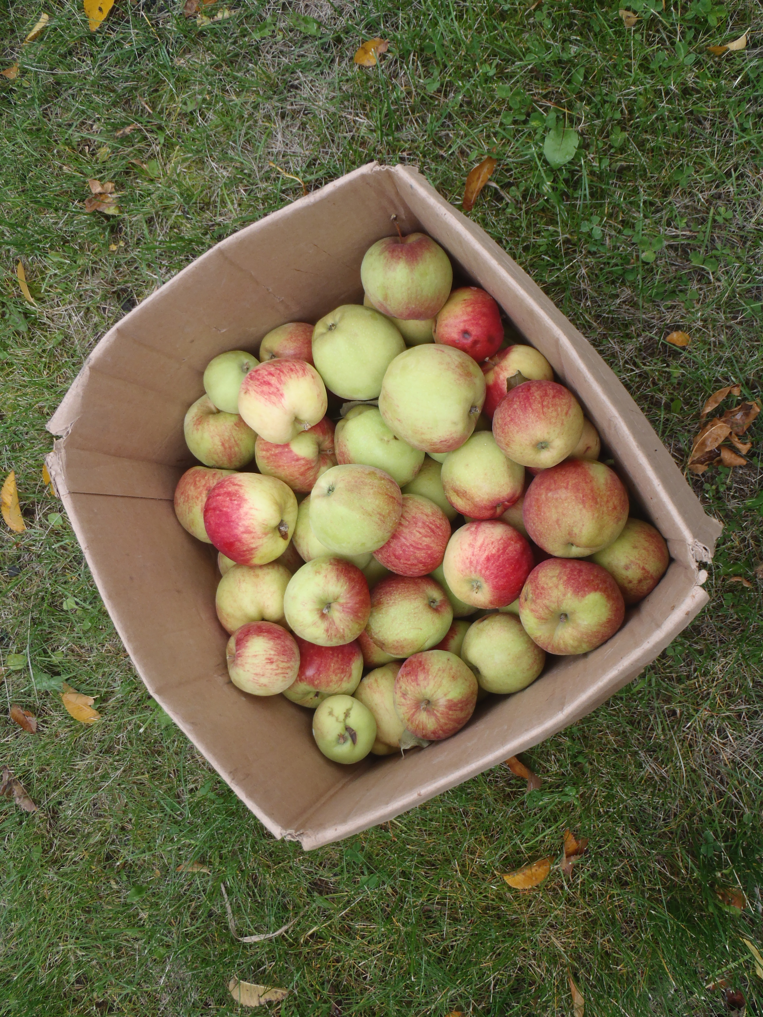 A box of apples from a neighbour's tree